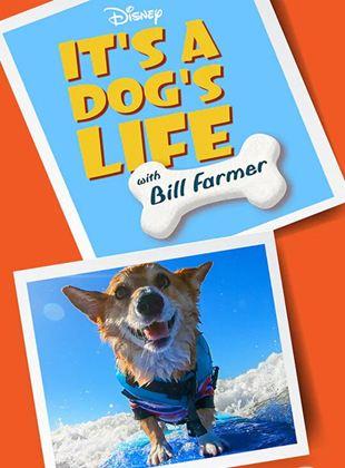 Super Cães - Apresentado por Bill Farmer
