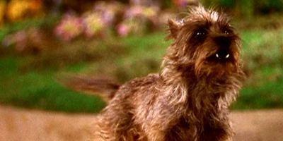 O Mágico de Oz: Warner vai produzir animação protagonizada pelo cão Totó