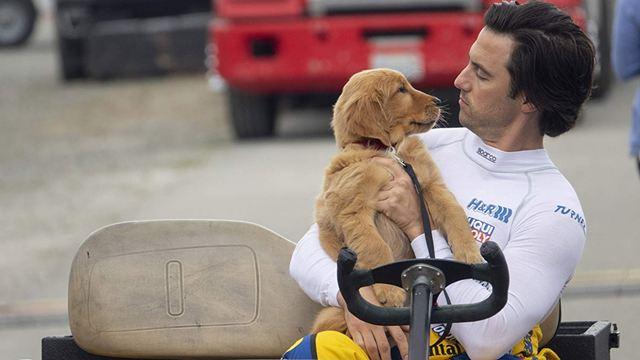 Meu Amigo Enzo: Milo Ventimiglia domina as pistas de corrida em primeiro trailer