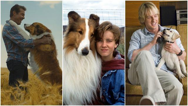 10 cachorros inesquecíveis do cinema