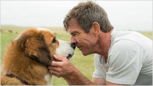PETA clama por boicote a Quatro Vidas de um Cachorro após vazamento de um vídeo do set