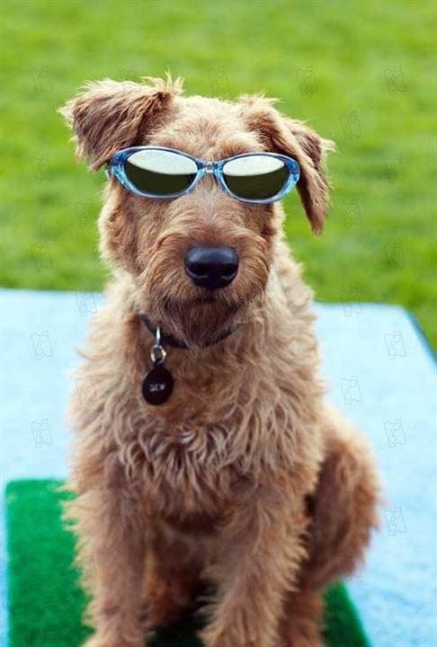 O Cachorro Bombeiro : Foto Todd Holland