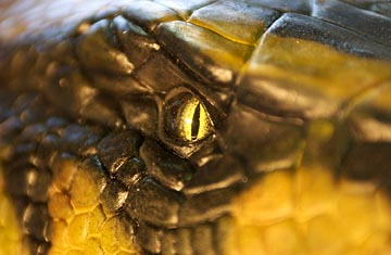 Anaconda 2 - A Caçada pela Orquídea Sangrenta : foto