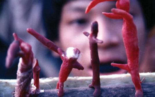 Segredos da Tribo : Foto