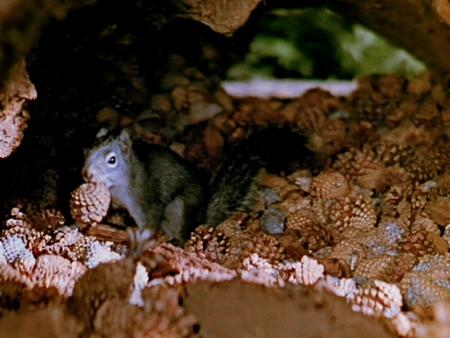 No Coração da Floresta : Foto