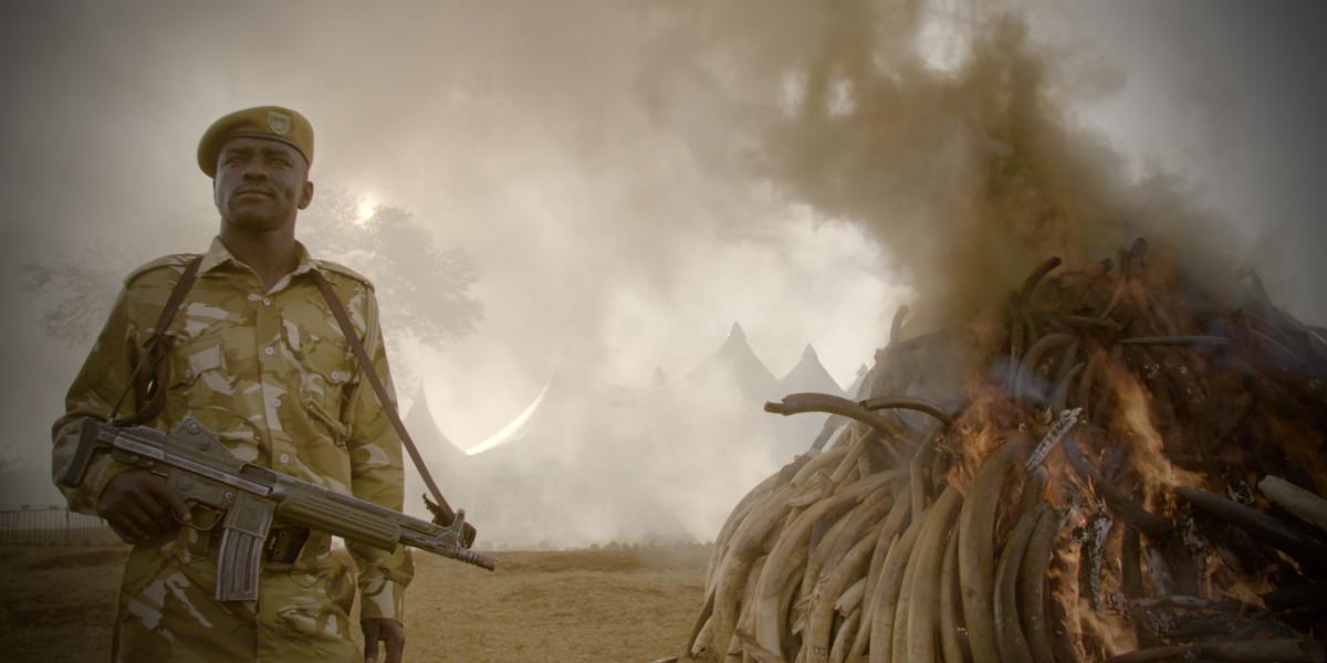 O Extermínio do Marfim : Foto