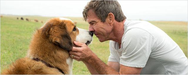 Quatro Vidas de um Cachorro ganhará sequência graças a sucesso do filme na China