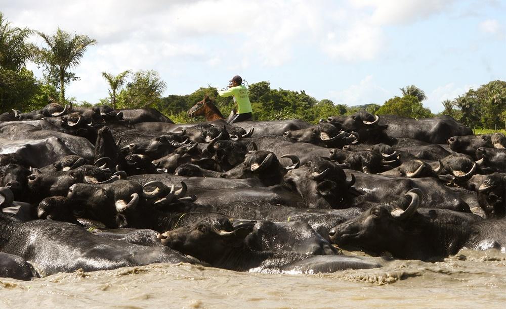 Bravos Valentes - Vaqueiros do Brasil