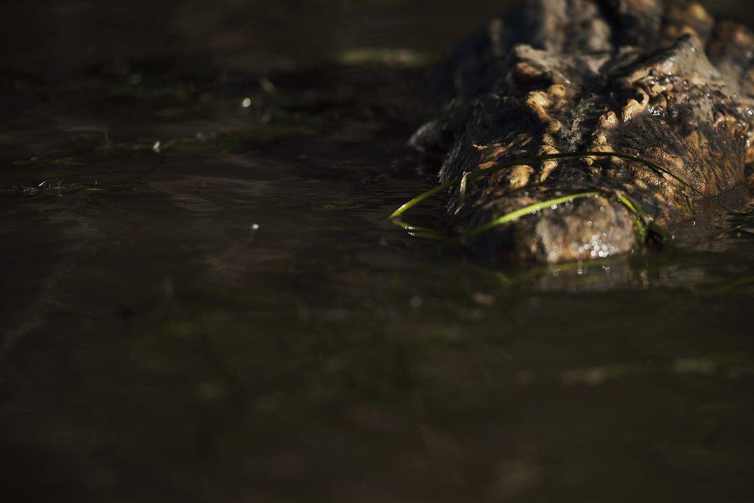 Crocodilos – A Morte Te Espera