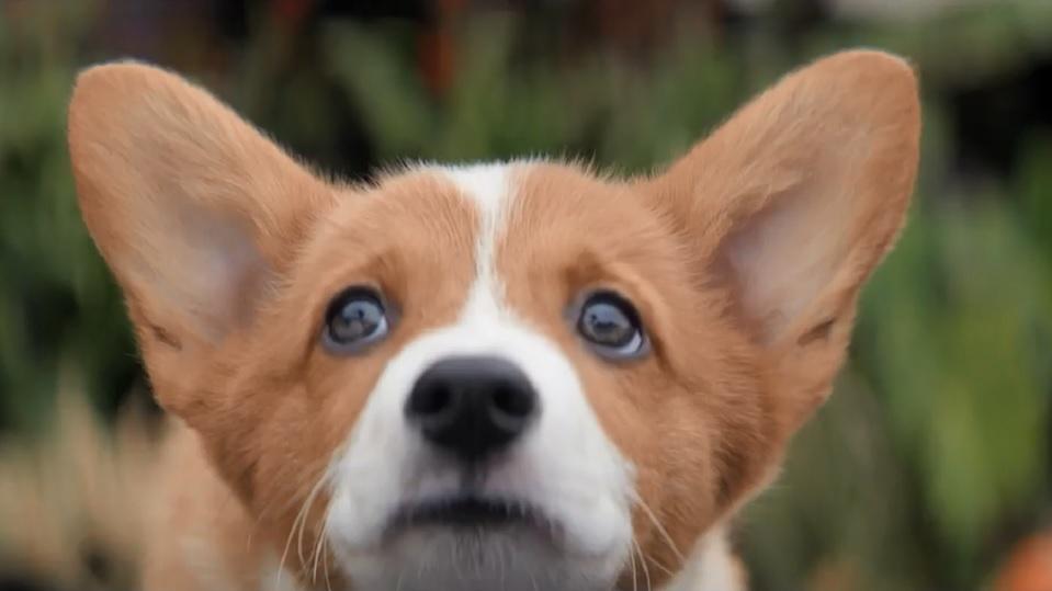 Resultado de imagem para 4 vidas de um cachorro trailer